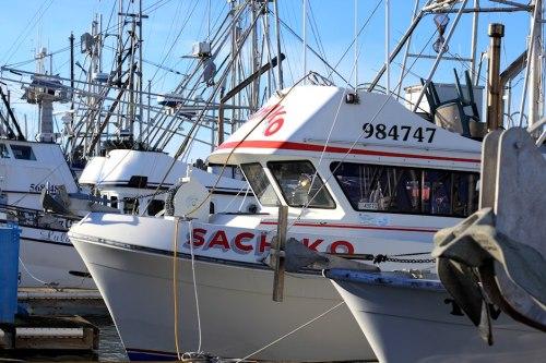 Boats Of Half Moon Bay 5