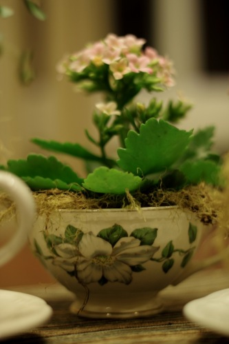 Flower In A Teacup