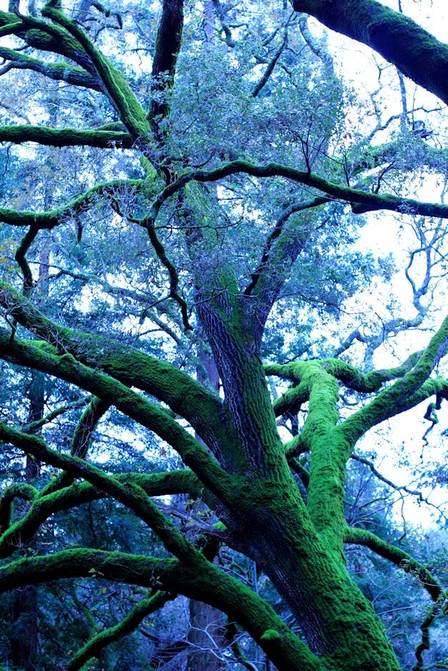 Big Mossy Trees 1