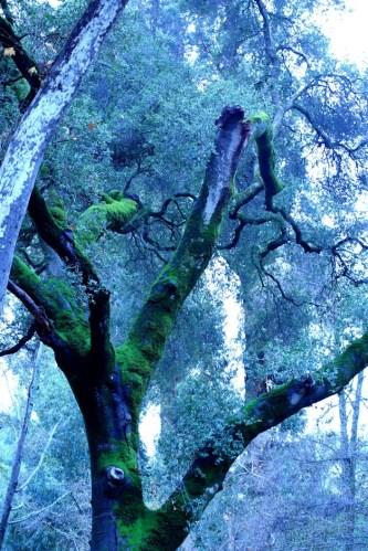 Big Mossy Trees 2