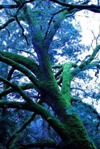 Big Mossy Tree 3