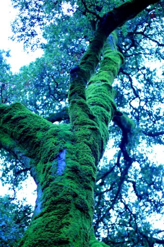Big Mossy Tree 4