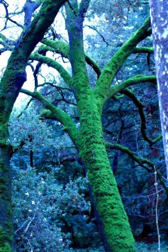 Big Mossy Tree 6