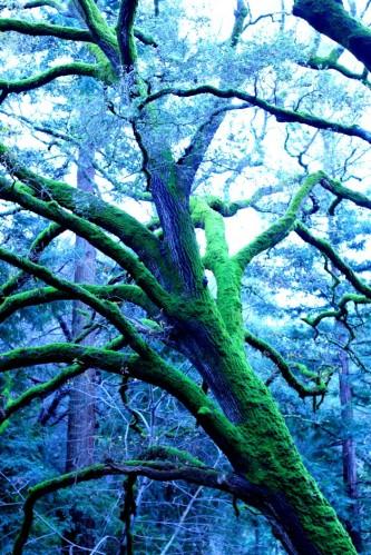Big Mossy Tree 7