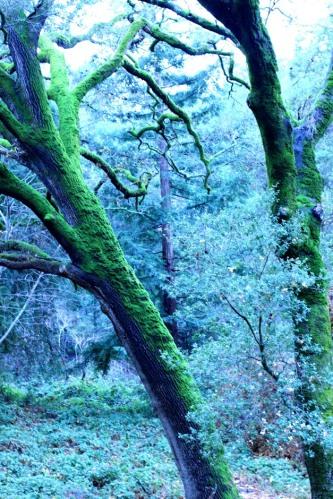 Big Mossy Tree 8