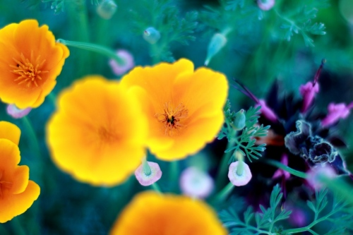 Bright Yellow Flowers With Purple