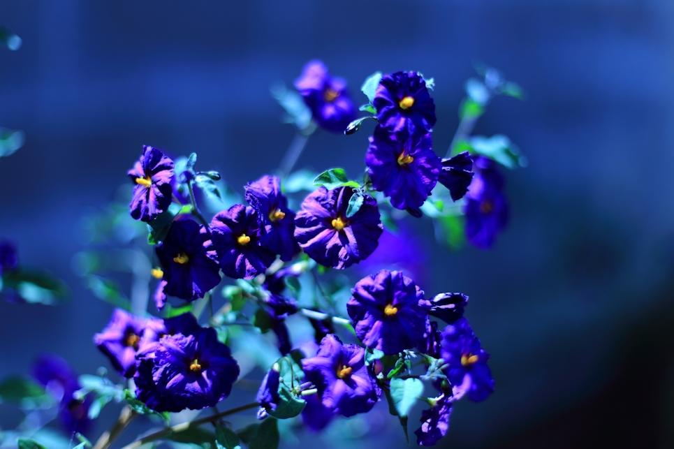 Soft Blue Day