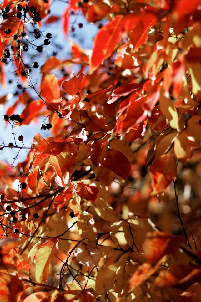 fall_red_leaves.jpg