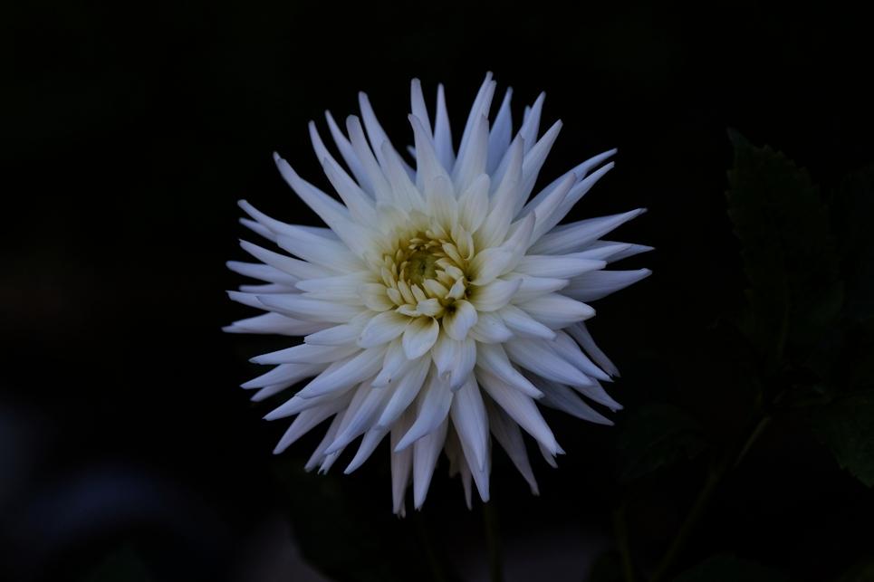 Warm Fall Flower