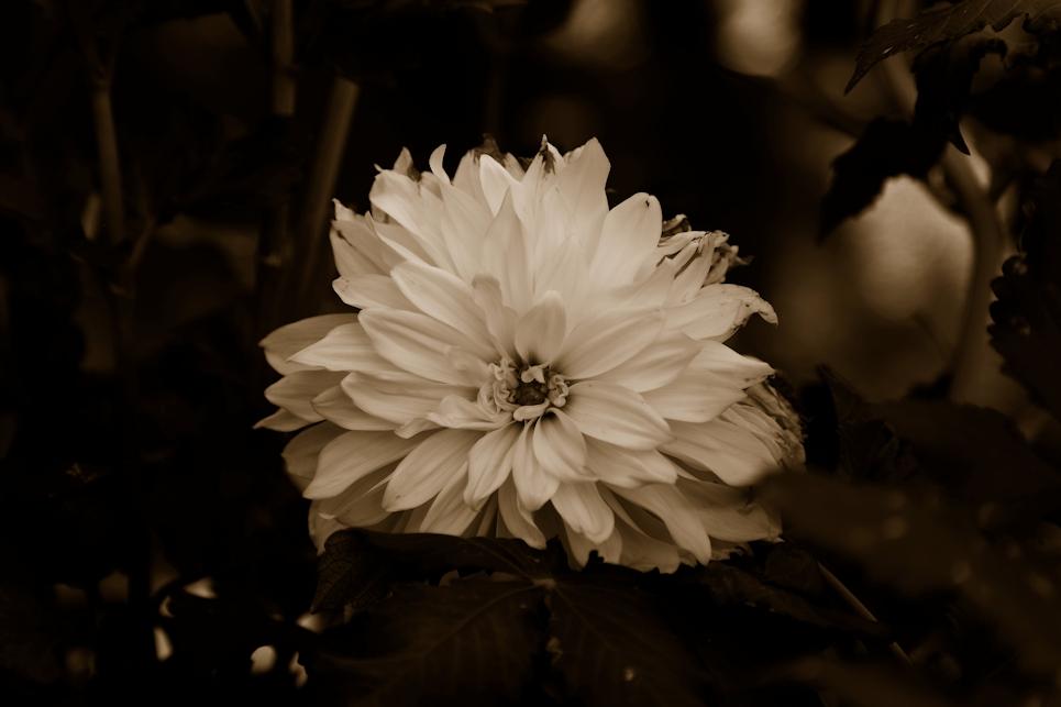 Ghostly Flower