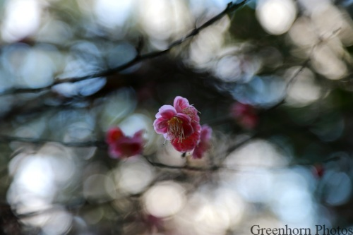 Pink tree blossoms with a prominent bokeh to delight.